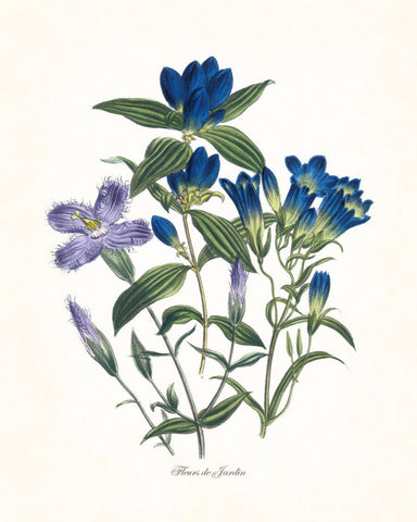 Fleurs de Jardin Blue Series No.5 - Botanical Art Print