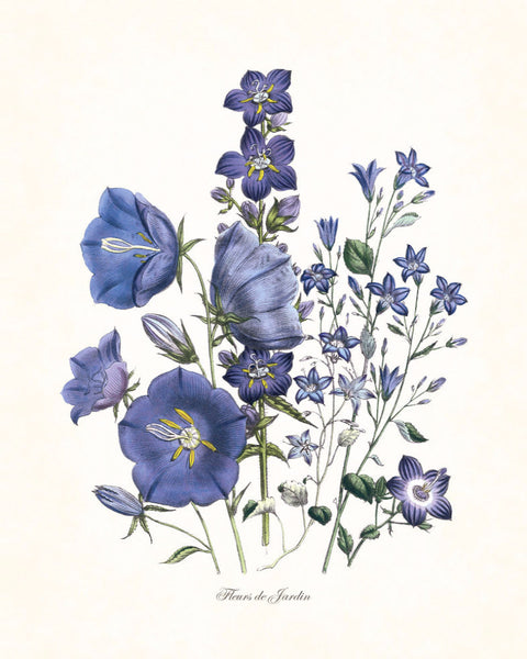 Fleurs de Jardin Blue Series No.6 - Botanical Art Print