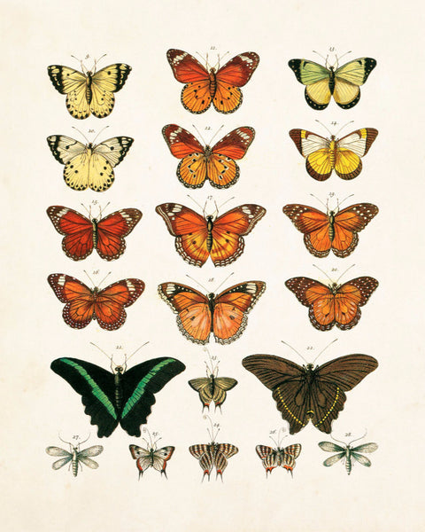 Vintage Butterfly Series Plate No. 1