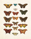 Vintage Butterfly Series Plate No. 2