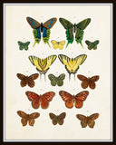 Vintage Butterfly Series Plate No. 3