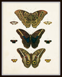 Vintage Butterfly Series Plate No. 8
