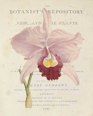 Vintage French Orchid Collage No.1 - Botanical Art Print