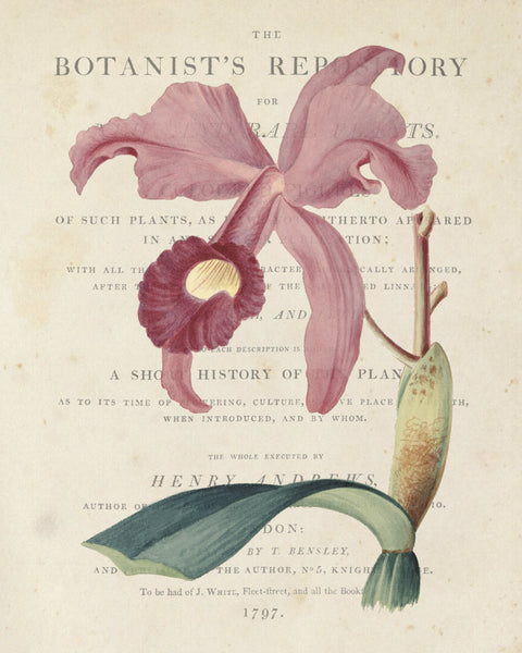Vintage French Orchid Collage No.3 - Botanical Art Print