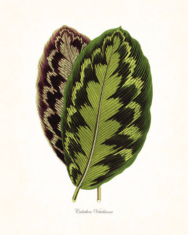 Vintage Botanical Tropical Leaf Series No.5