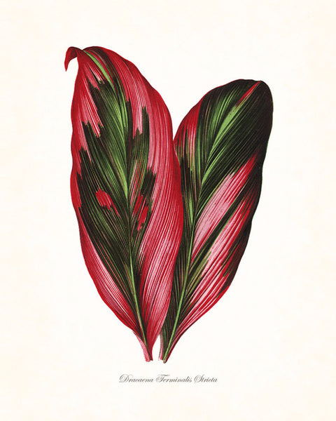 Vintage Botanical Tropical Leaf Series No. 3