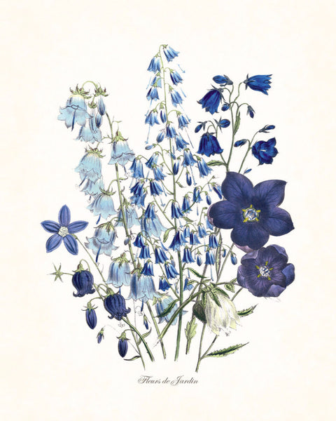 Fleurs de Jardin Blue Series No.1 - Botanical Art Print