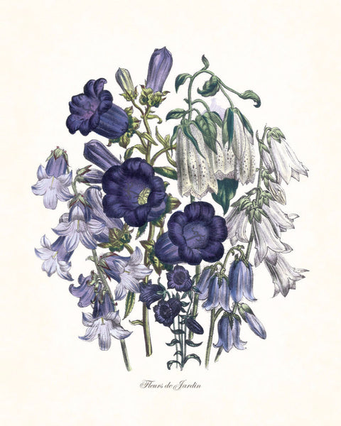 Fleurs de Jardin Blue Series No.3 - Botanical Art Print