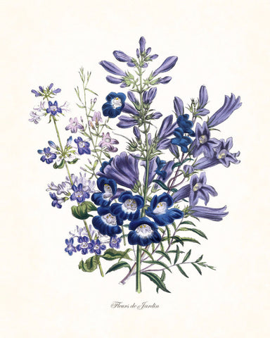 Fleurs de Jardin Blue Series No.4 - Botanical Art Print