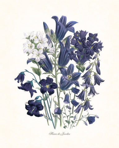 Fleurs de Jardin Blue Series No.2 - Botanical Art Print