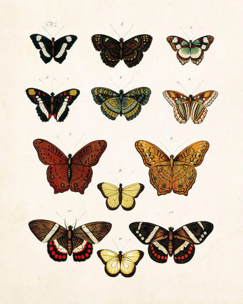 Vintage Butterfly Series Plate No. 5
