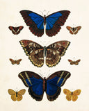 Vintage Butterfly Series Plate No. 7