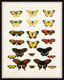 Vintage Butterfly Series Plate No. 6