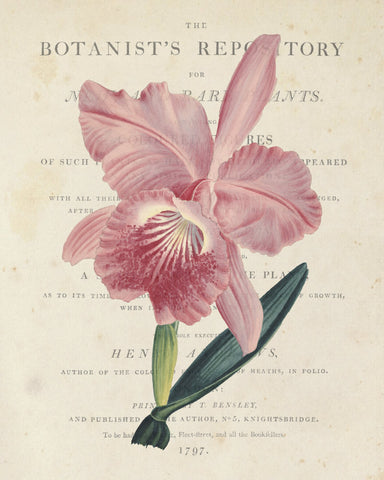 Vintage French Orchid Collage No.2 - Botanical Art Print