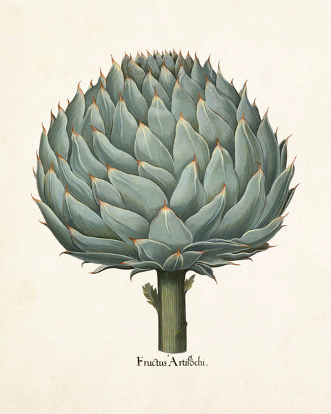 Antique Artichoke No. 1 Botanical Print