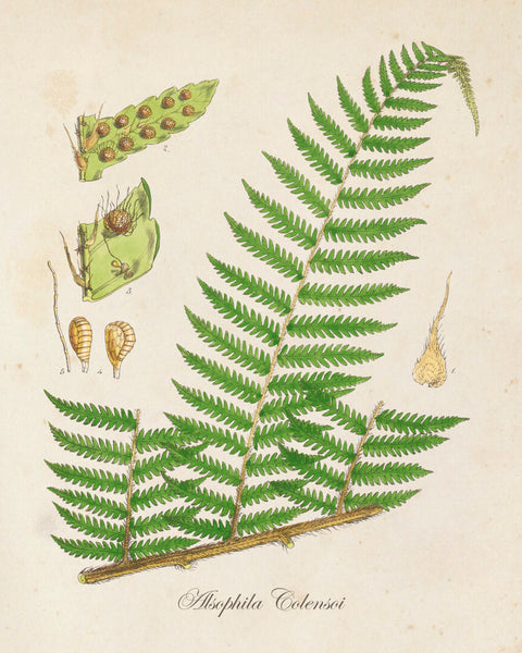 British Fern No.1 Botanical Print - Giclee Art Print