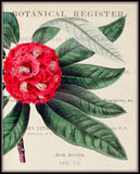 Rhododendron Floral Collage No.15 - Botanical Print
