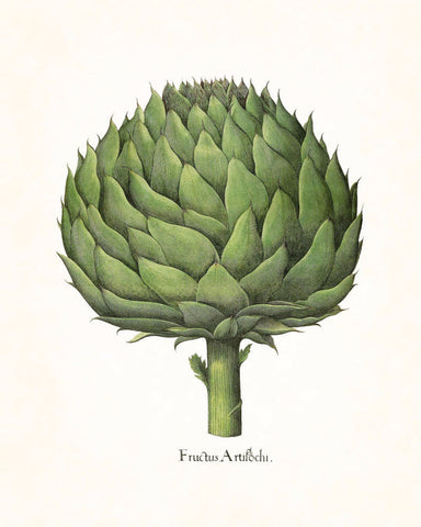 Antique Artichoke No.2 Botanical Print