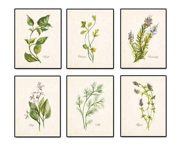 Watercolor Herbs Print Set 2 - Botanical Print Set