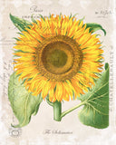 French Sunflower Collage Botanical Print