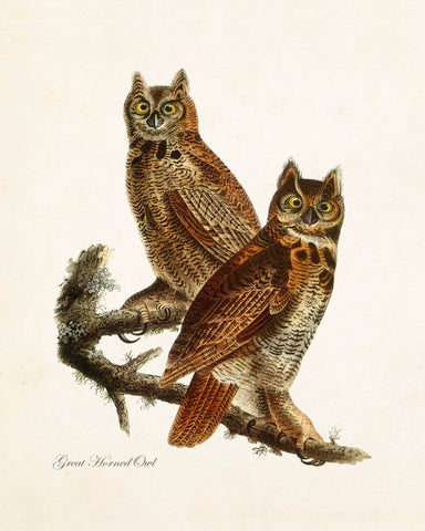Vintage Audubon Great Horned Owl
