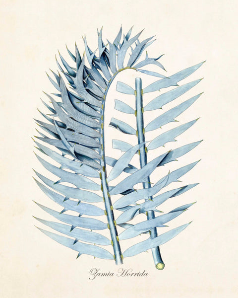 Vintage Palm Frond - Giclee Botanical Art Print