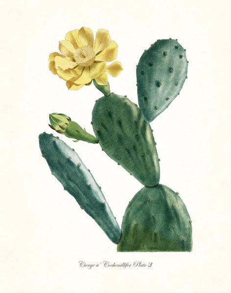 French Cactus Series No.3 - Botanical Art Print