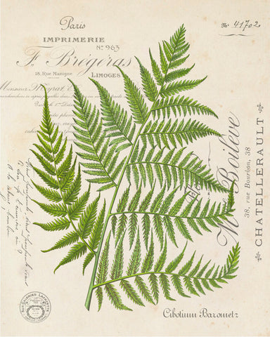 Vintage Fern Collage Botanical Print No. 31