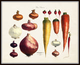 French Vegetable Print No. 1- Botanical Print