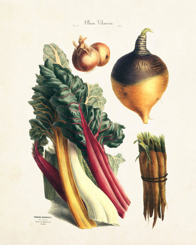 French Vegetable Print No. 13 - Botanical Print