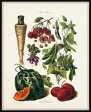 French Vegetable Print No. 30 - Botanical Print