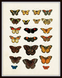 Vintage Butterfly Series 1 Print No. 4