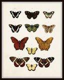 Vintage Butterfly Series 1 Print No. 5