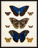 Vintage Butterfly Series 1 Print No. 7