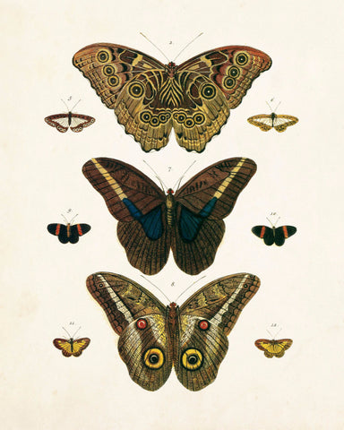 Vintage Butterfly Series 1 Print No.8