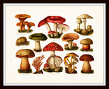 Antique Mushrooms Botanical Art Print