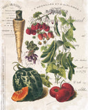 French Vegetable Collage No.2 - Botanical Print