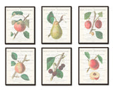 Vintage Fruit Botanical Collage Print Set No. 1