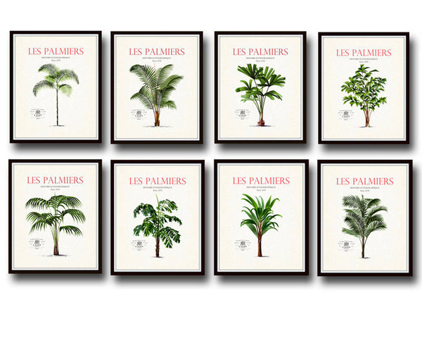 Vintage French Palm Tree Print Set No. 1 - Botanical Print Set