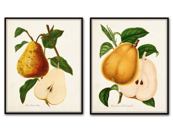 French Pears Botanical Print Set