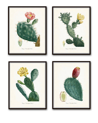 French Cactus Botanical Print Set No. 1