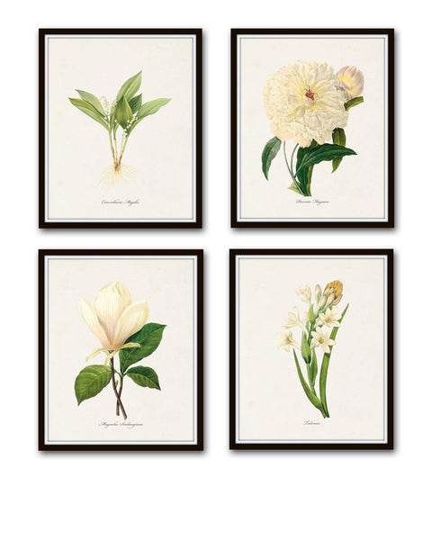 Redoute White Botanical Print Set No. 1 - Canvas Art Prints