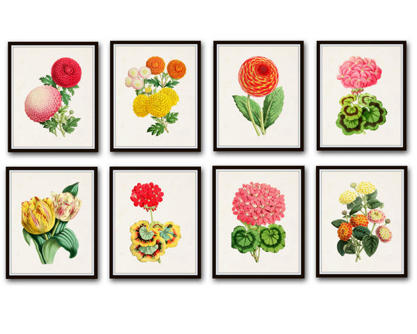 The Floral Magazine Print Set No. 2 - 8 Botanical Prints