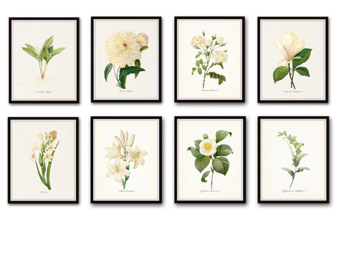 Redoute White Botanical Print Set No. 8