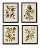 Vintage Bird and Botanical Print No. 12
