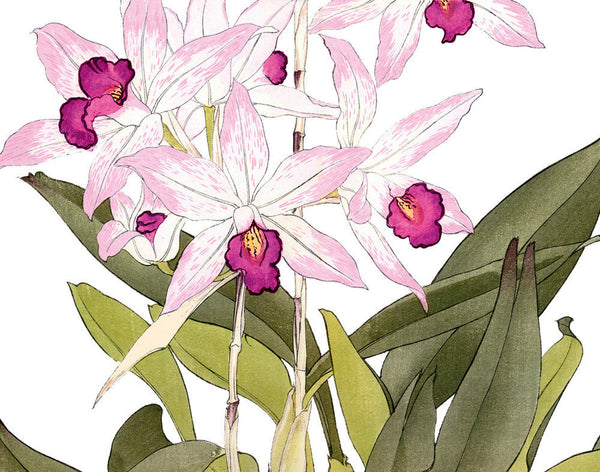 Tropical Woodblock Orchids Botanical Print No.4 - Giclee Print