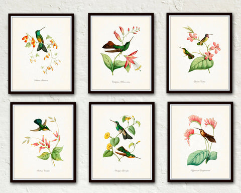 Hummingbird Print Set No. 1 - Bird Print Set