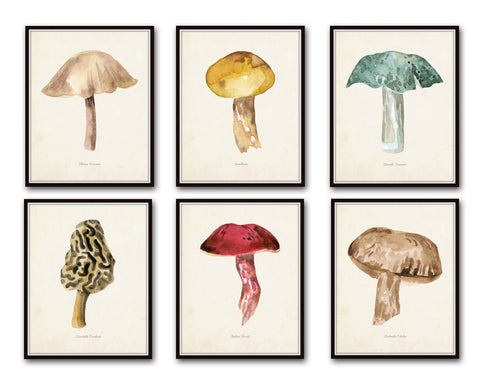 Watercolor Mushrooms Print Set 6 - Botanical Prints