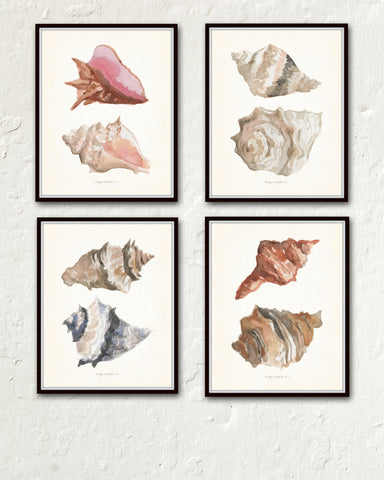 Watercolor Seashells Print Set No. 5