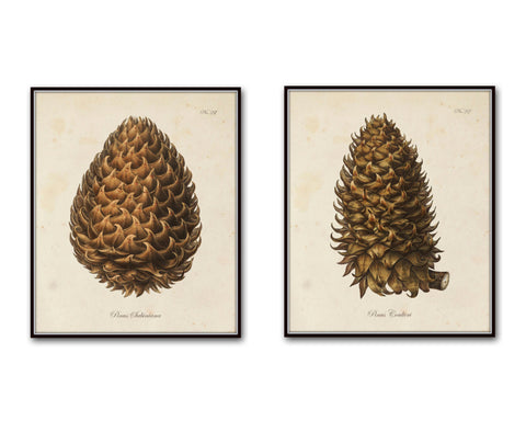 Vintage Conifer Pine Cone Prints I & II - Botanical Print Set